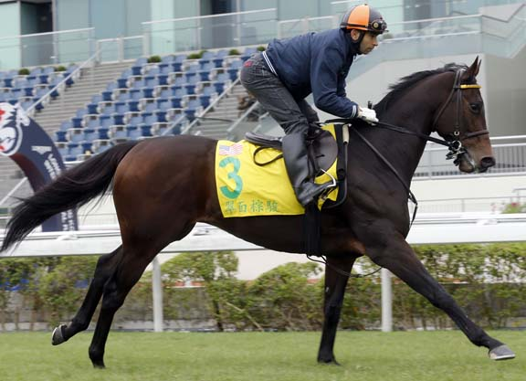 Hong Kong Sprint Hopefuls on Track
