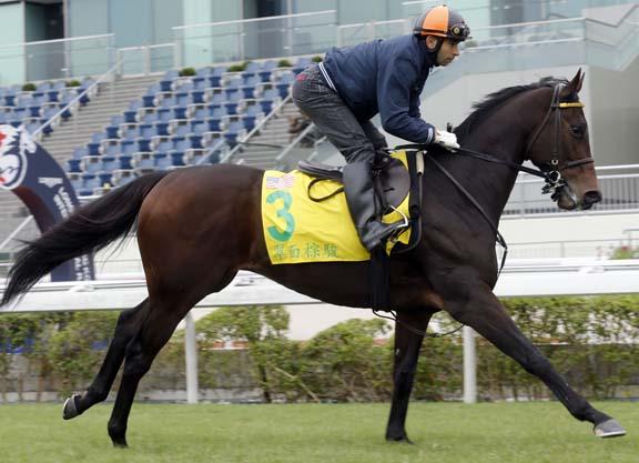 Hong Kong Sprint Hopefuls on Track