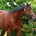 RAVEN'S PASS IS THE BEST SIRE EVER