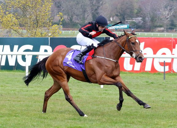 Jet Setting New Goffs Topper