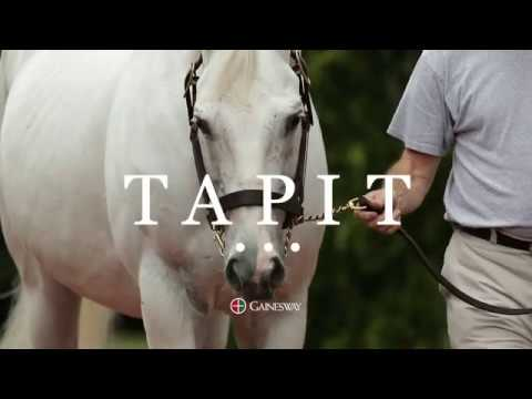 Tapit: Find Your Yearling at the Upcoming Yearling Sales